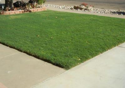 darkgreenbermudagrass