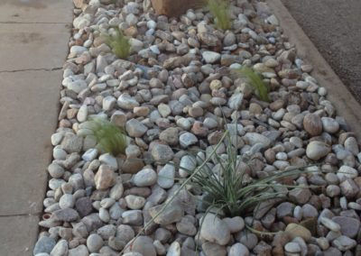 desertplantswithrock